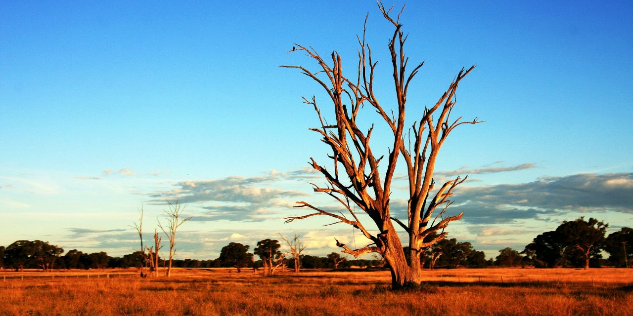 Research brief: How ENSO drives Australian heatwaves