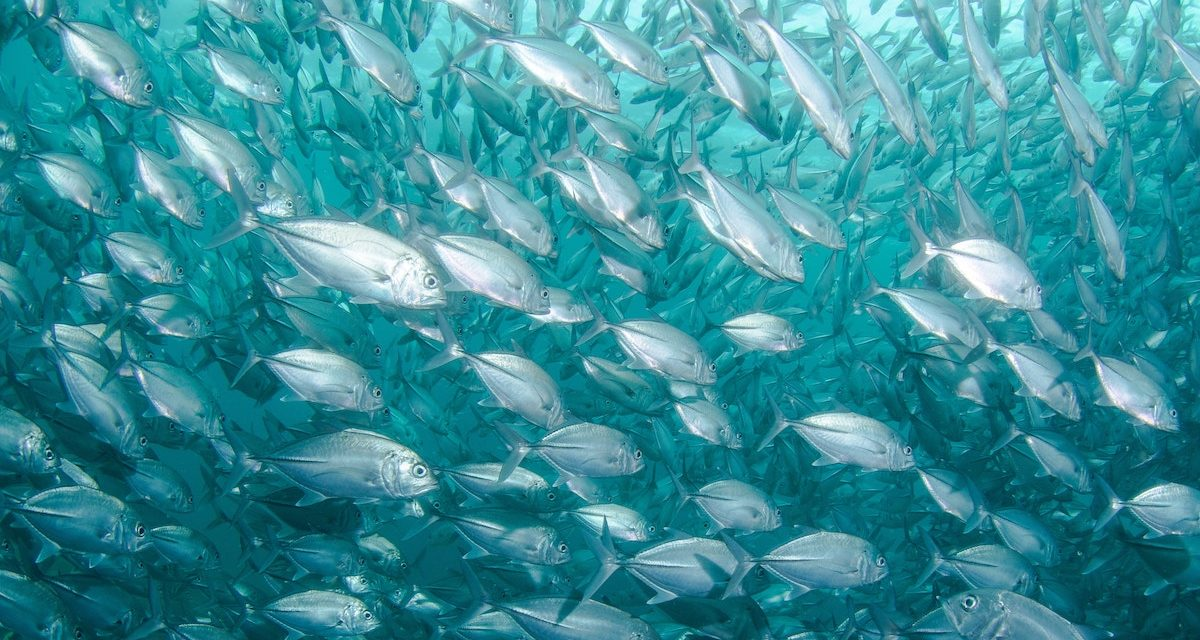 Research brief: Which species matter most for marine ecosystems to survive climate change?