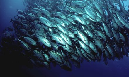 Safeguarding the world's largest tuna fishery