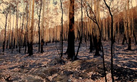 Australia's Black Summer a climate wake-up call